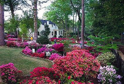Tyler Texas Azalea Spring Flower Trail